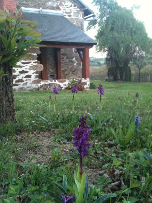 Une orchidée dans le jardin